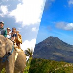 エレファントサファリ+観光